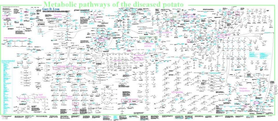 Metabolic Pathways Of The Diseased Potato